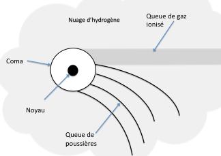 Schéma d'une comète : noyau, coma, les deux queues et le nuage d'hydrogène (Personnel - Arius)