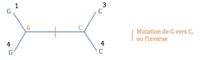 Typologie 3