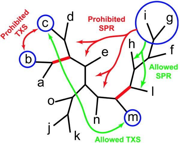 Algorithme génétique métapopulationnel - Consensus pruning.