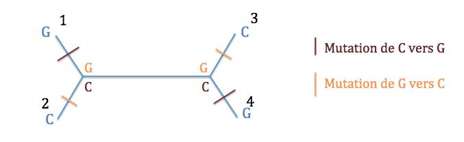 Typologie 1