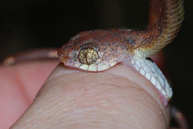 Morsure De Serpent Comment Réagir Tutoriels Zeste De Savoir